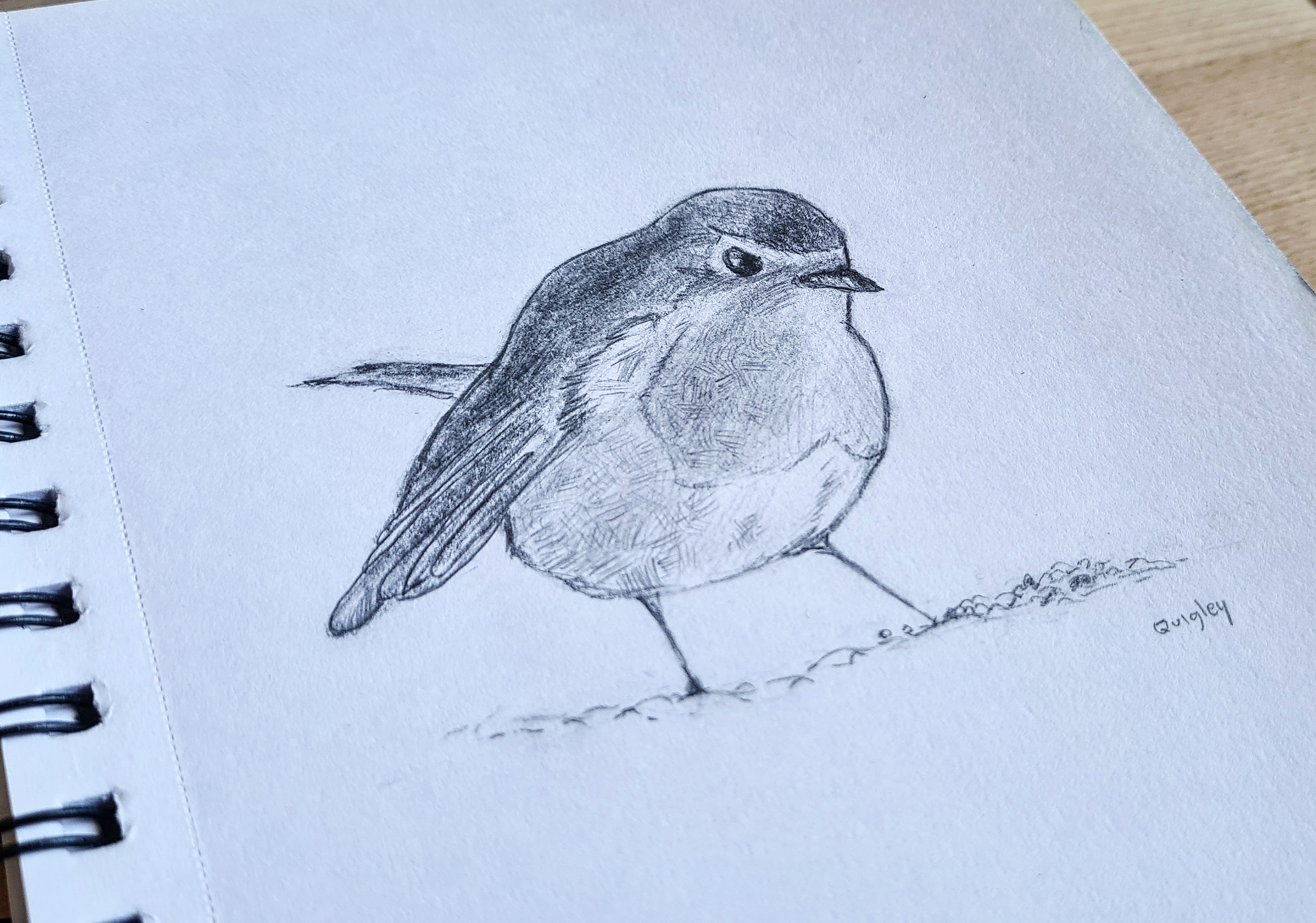 Robin-pencil-drawing-Feb-2021