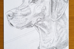 Pencil-drawing-of-Willow-Chris-Janaways-dog-2nd-April-2018-watermark-web