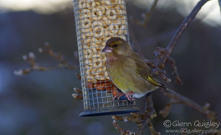 bird-feeder-5