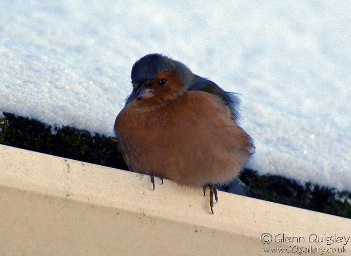 bird-gutter-2a
