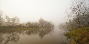 Swans on a Foggy River Lagan